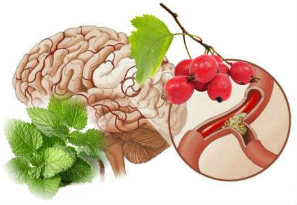 Диета при атеросклерозе сосудов головного мозга и нарушении мозгового кровообращения
